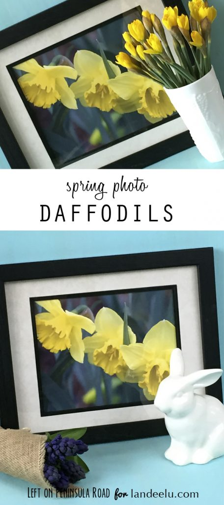 http://www.landeeseelandeedo.com/wp-content/uploads/2015/03/Spring-Daffodils-Photo-Display-Ideas_LeftonPeninsulaRoad_600px1.jpg