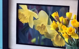 Spring Daffodil photo download
