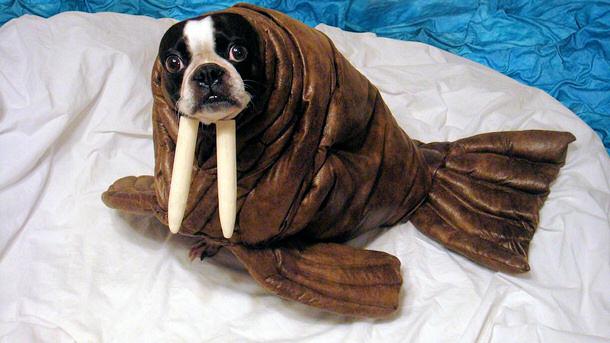 Wiener Dog Halloween Costumes