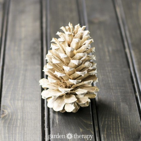 bleached-single-pinecone- garden therapy