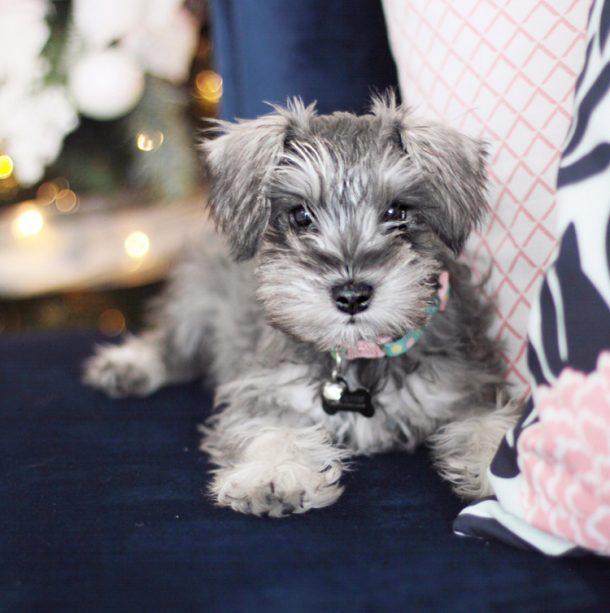 http://www.landeeseelandeedo.com/wp-content/uploads/2017/01/Lola-Puppy-pic.jpg