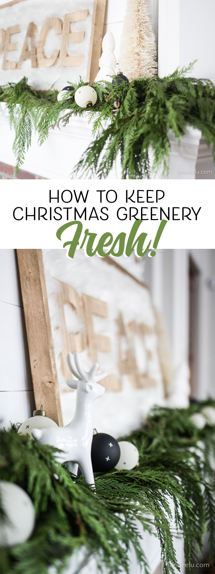 How To Keep Bad Luck Into Distance With These Two Plants: How To Keep Christmas Greenery Fresh!